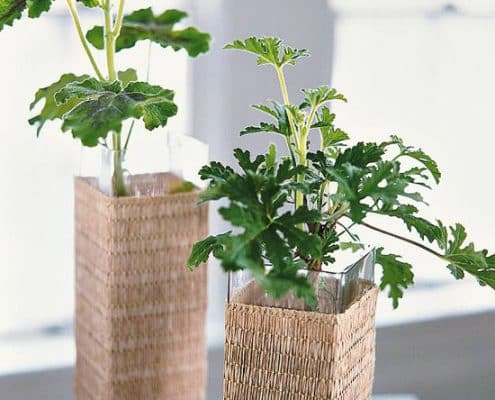 Growing Plants in the Workplace 6