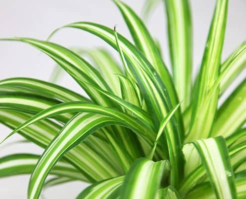 Growing Plants in the Workplace 3