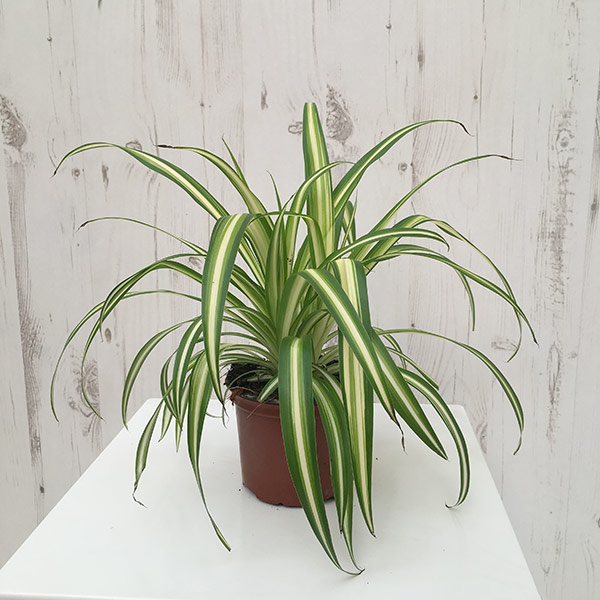 Growing Plants in the Workplace 2