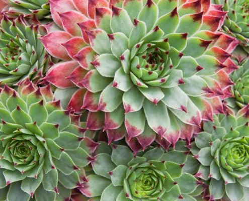 Growing Plants in the Workplace 13