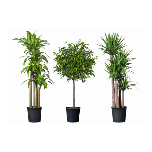 Growing Plants in the Workplace 1